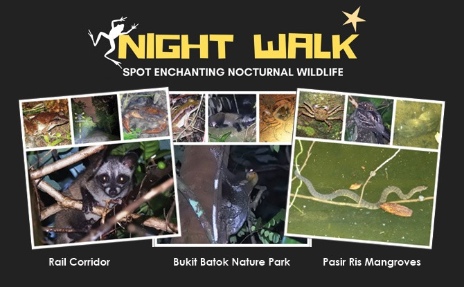 Little Night Outings: Nature Night Walks at Three Parks