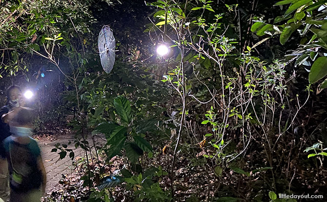 Little Night Outings: Nature Night Walks