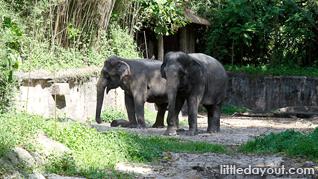 00-Elephants