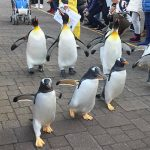 Noboribetsu Marine Park NIXE, Hokkaido: Penguin Parades & Other Marine Encounters With The Family