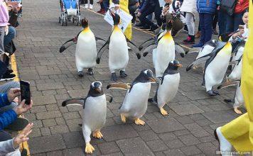 Noboribetsu Marine Park NIXE, Hokkaido: Penguin Parades & Other Marine Encounters With The Family