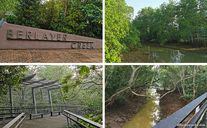 5 Reasons To Explore Berlayer Creek & Its Mangroves