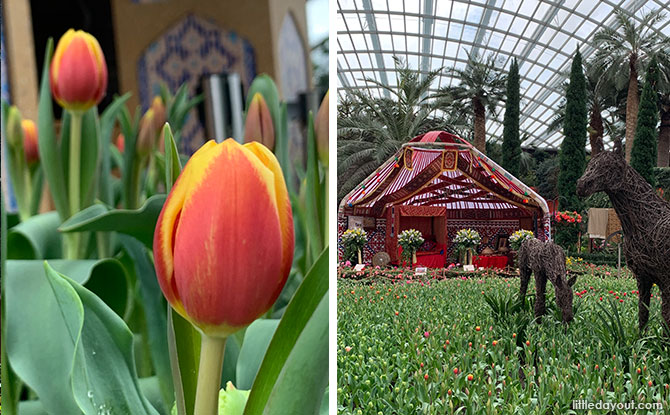 Tulipmania 2021 At Gardens By The Bay: Discover The Cultural Heritage Of Kazakhstan