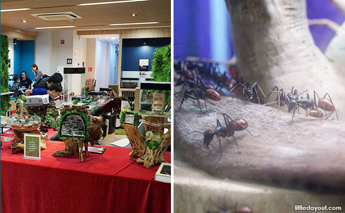 Singapore Ants Exhibition: Uncovering The Hidden World Of Ants