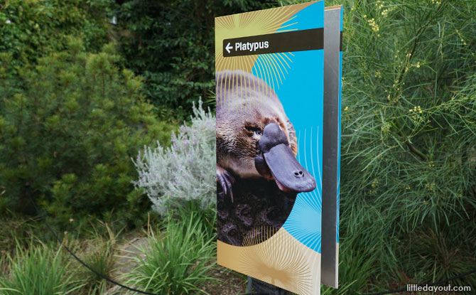 Platypus exhibit at the Melbourne Zoo.