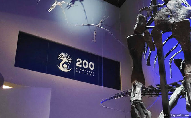 A Look Back At 200: A Natural History At Lee Kong Chian Natural History Museum