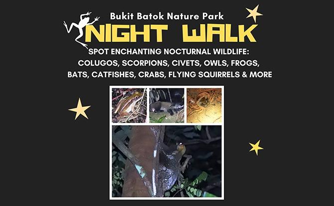Little Night Outing: Nature Night Walks at Bukit Batok Nature Park