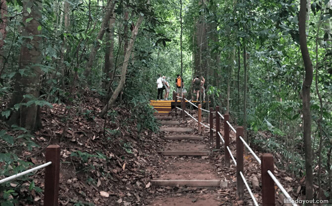 Many Paths to Explore at Bukit Timah Nature Reserve