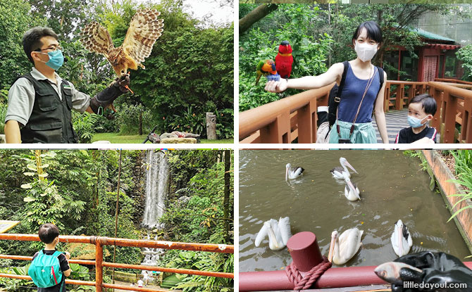 Wild Encounters & Off-The-Beaten-Path Trails: 5 Ways To Rediscover Jurong Bird Park