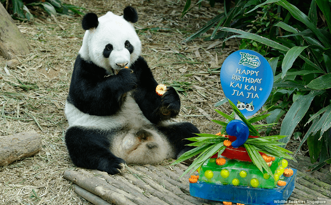 Panda's Birthdays 2016