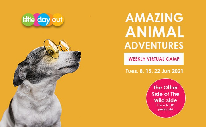 Little Day Out's Amazing Animal Adventures