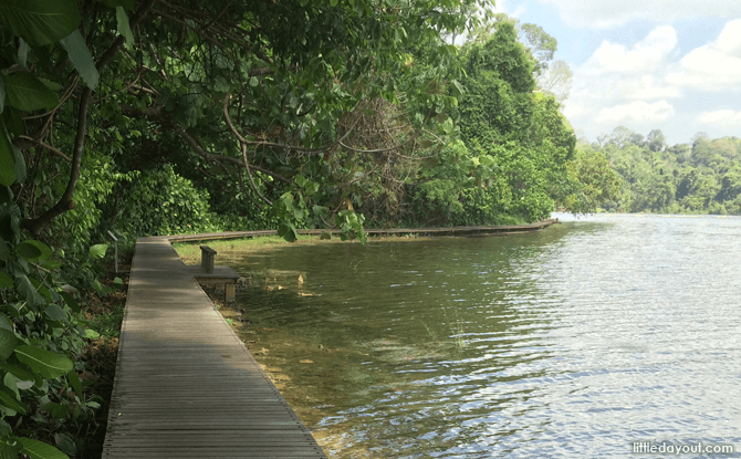 MacRitchie Boardwalk - Walking Trails in Singapore