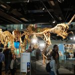 Melbourne Museum Is An Amazing Showcase Of Natural And Australian History