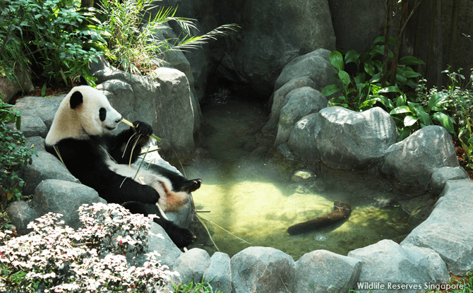 01-PandaParty