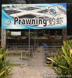 Prawning