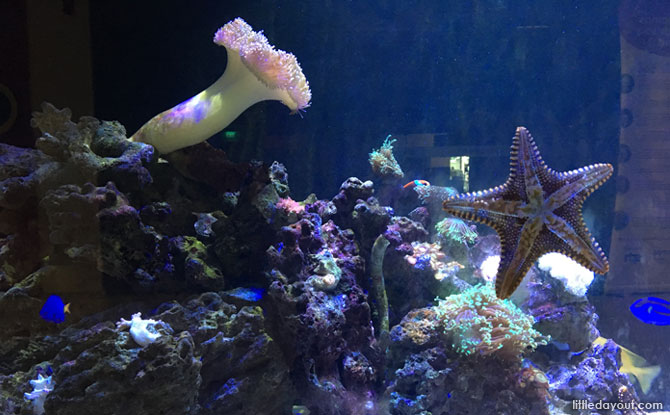 The 3-metre long aquarium at MindChamps PreSchool @ Concorde Hotel (Orchard) is a mesmerising sight. It is also used for thematic learning sessions for the children.