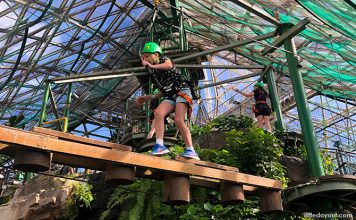 Cairns ZOOM & Wildlife Dome: Go Ziplining Over A Crocodile In Australia