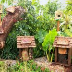 Community Garden Festival 2019: Gardening Trends, Ideas And Family Activities