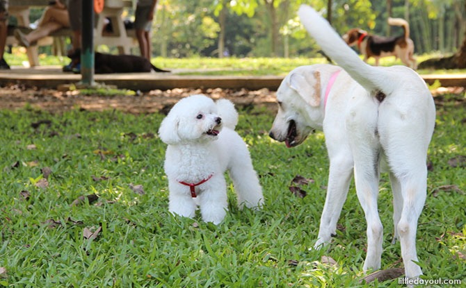 Dog Runs In Singapore For A Doggy Day Out