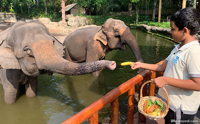 Meet the Elephants at Singapore Zoo