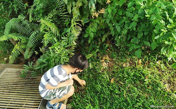 Go On A Treasure Hunt: Geocaching With Kids