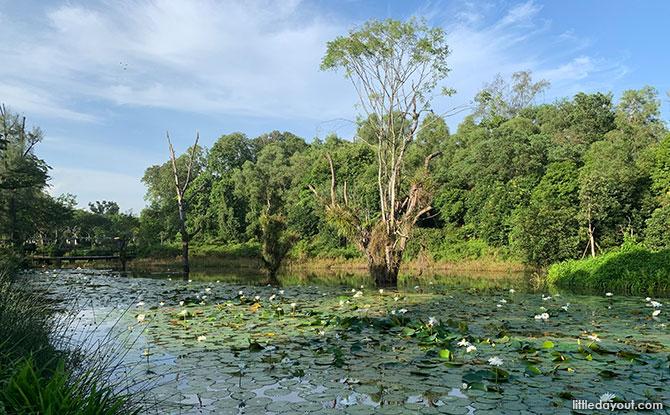 Hampstead Wetland Park in Seletar Aerospace Park