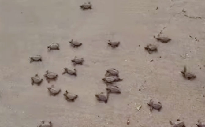 Hawksbill Turtles In Singapore: What To Do If You Spot Them