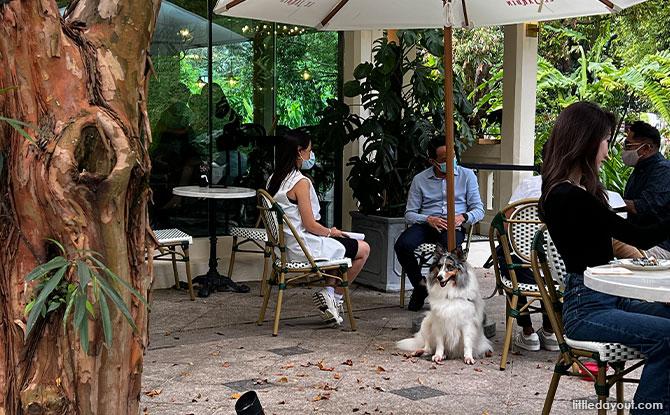 Le Jardin is a dog-friendly cafe