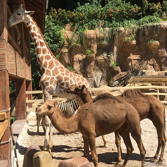 Animals at Lost World of Tambun