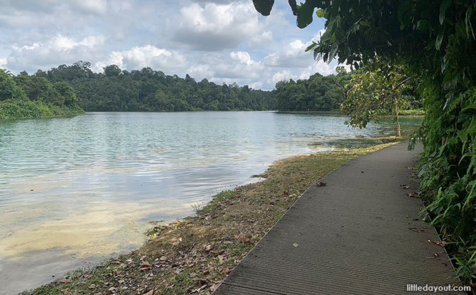 Boardwalk - MacRitchie Trail