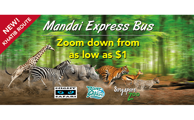 Mandai Express Bus - How to Get to Singapore Zoo