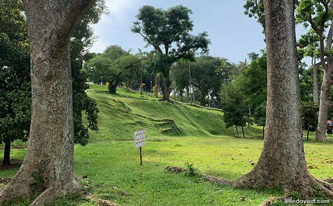 Mature Trees & Lush Greenery - Mount Emily Park