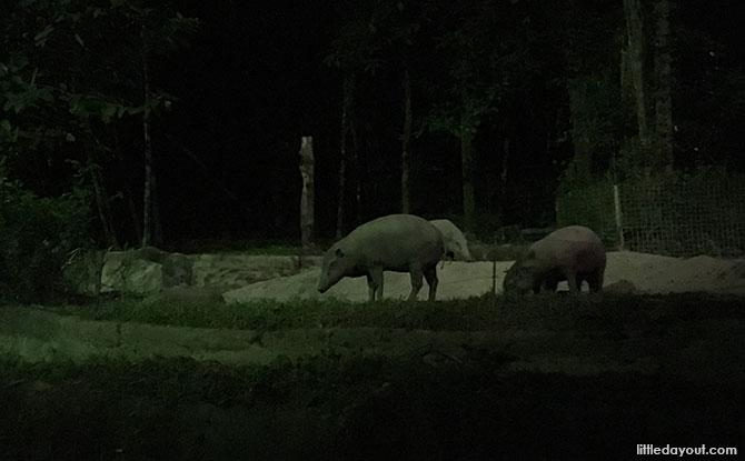East Lodge Trail at the Night Safari