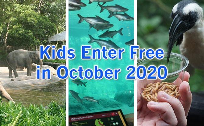 Kids Enter Free To Singapore Zoo, Jurong Bird Park & River Safari In October 2020