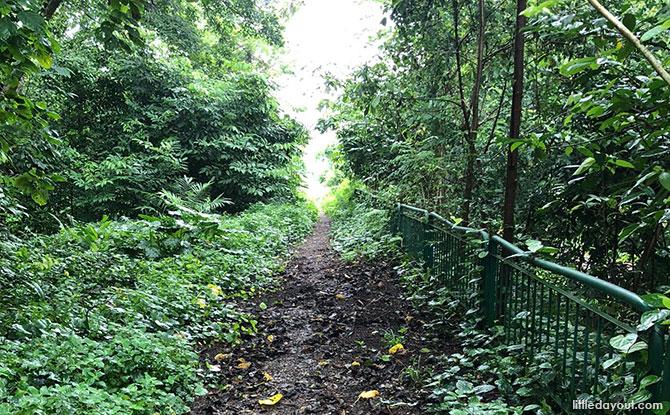 Walkway at the Green Corridor