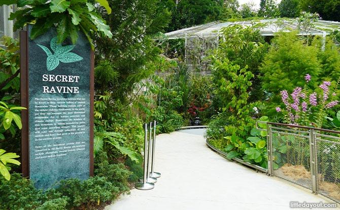 Exploring The Secret Ravine At National Orchid Garden