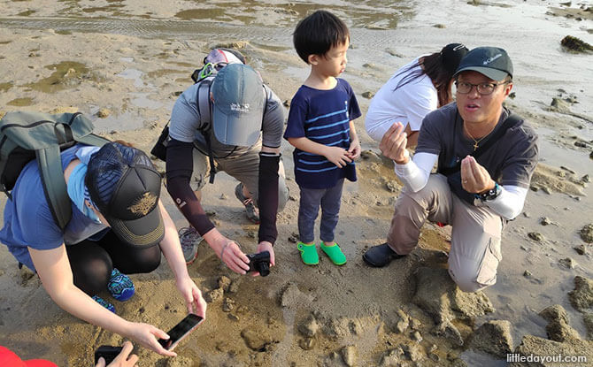 Free Family Fun at Sisters' Island Marine Park Intertidal Guided Walk by NParks