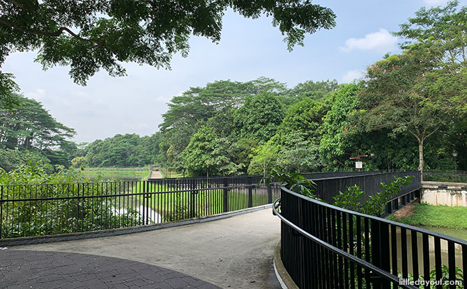 Springleaf Nature Park: 5 Things That Aren't Immediately Apparent About This Sungei Seletar Park