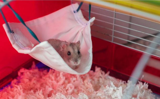 temasek mask hamster hammock