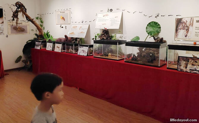 The Singapore Ant Museum