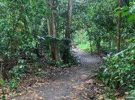 Venus Loop: Boardwalks & Nature Paths At Venus Drive