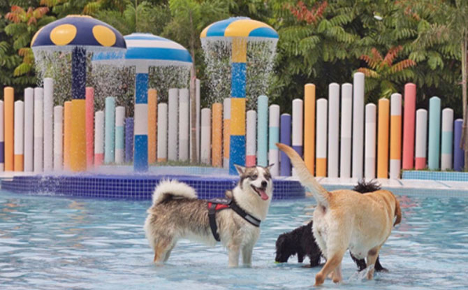 Wag & Wild: Dog Water Park In Singapore For Pawrents And Pooches