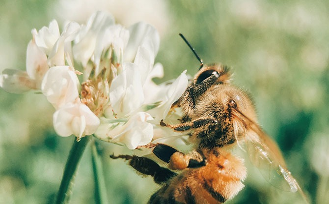 World Bee Day: Shows To Get The Buzz On Bees