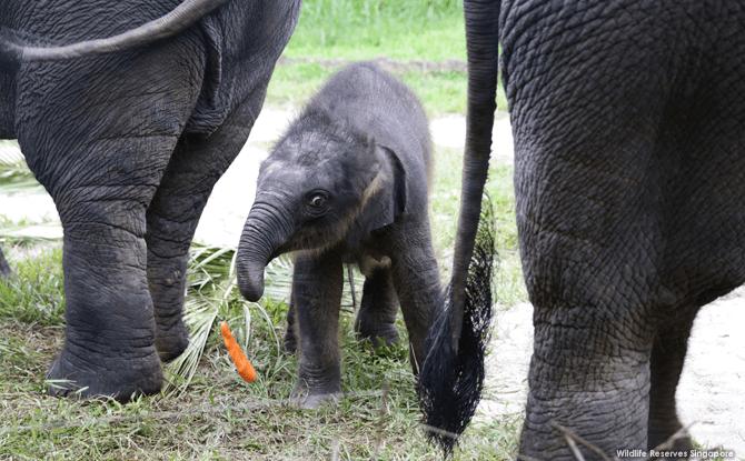 Baby Elephant Night Safari