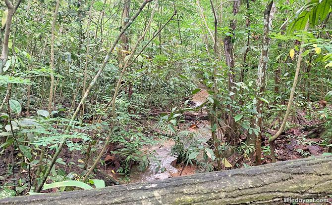 Freshwater Stream, Bukit Batok Nature Park