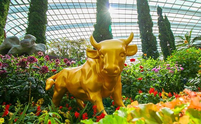 Dahlia Dreams 2021 Flower Dome