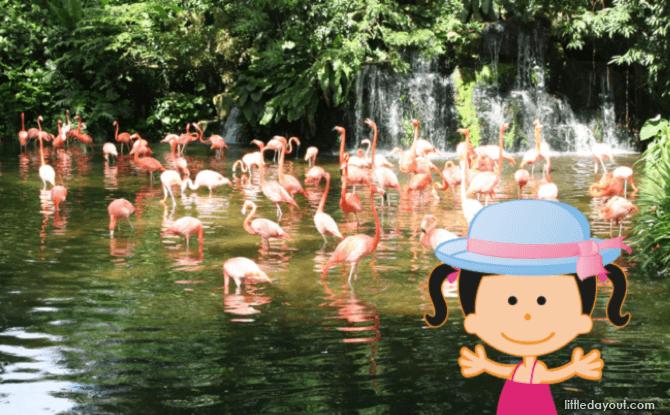 Ellie Bird Park