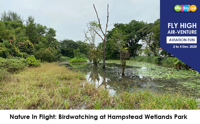 Little Day Out's Fly High Air-venture Camp: Birdwatching at Hampstead Wetlands Park