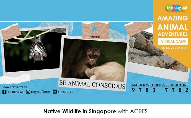 Little Day Out's Amazing Animal Adventures with ACRES