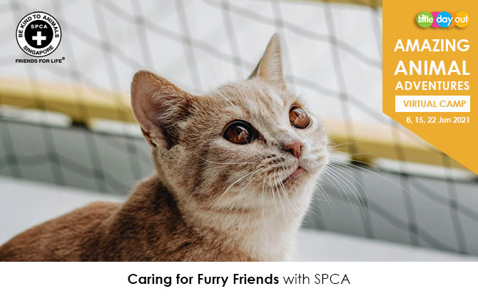 Little Day Out's Amazing Animal Adventures with SPCA